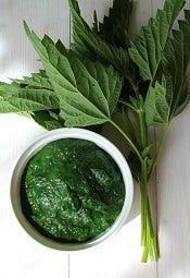 Pesto van groene planten